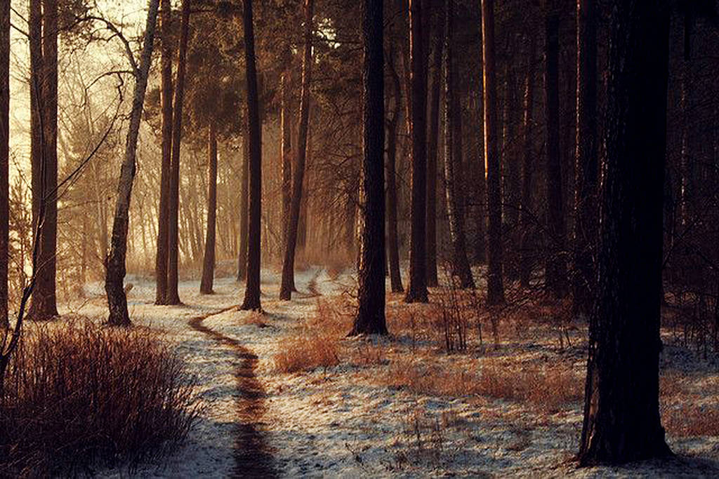 pictures of dark winter forest